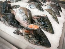 Testa di color salmone fresca su ghiaccio nel mercato ittico fotografia stock