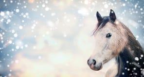 Testa di Gray Horse sul fondo del cielo con neve Fotografie Stock Libere da Diritti