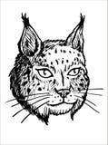 Testa di Lynx - illustrazione in bianco e nero Fotografia Stock Libera da Diritti