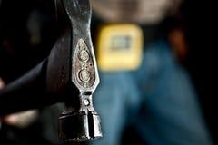 Testa di martello Immagine Stock