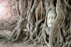 Testa di pietra di Buddha nell'albero della radice immagine stock libera da diritti