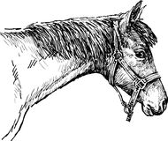 Testa di un cavallo Fotografia Stock Libera da Diritti