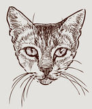 Testa di un gatto di casa Immagini Stock Libere da Diritti