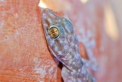 Testa di un gecko immagini stock