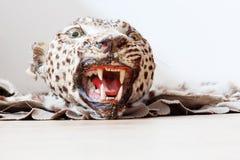 Testa di un giaguaro farcito Fotografie Stock