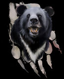 Testa di un orso nero illustrazione di stock