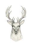 Testa disegnata a mano dei cervi con i corni Il nero animale di schizzo del disegno Immagini Stock