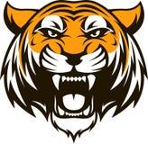 Testa feroce della tigre Fotografie Stock