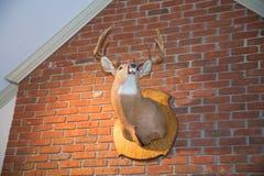 Testa montata dei cervi sul muro di mattoni Fotografia Stock Libera da Diritti
