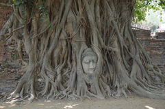 Testa nelle radici dell'albero, Wat Mahathat, Ayutthaya di Buddha Fotografie Stock