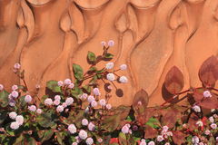 Testa rosa knotweed Fotografia Stock Libera da Diritti