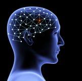 Testa trasparente 3d della persona e del cervello Fotografie Stock