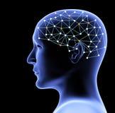 Testa trasparente 3d della persona e del cervello Immagine Stock