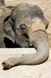 Testa triste dell'elefante immagini stock