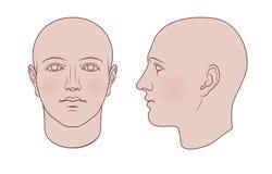 Testa umana disegnata a mano in 2 viste, variante colorata Fotografia Stock Libera da Diritti