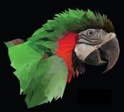 Testa variopinta del pappagallo dell'ara su fondo nero Fotografia Stock Libera da Diritti