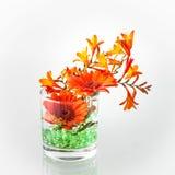 Teste dei fiori delle gerbere di un'arancia in un vaso di vetro Fotografie Stock