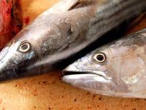 Teste dei pesci Immagine Stock
