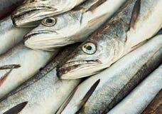 Teste dei pesci di merluzzo Fotografia Stock Libera da Diritti