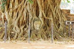 Teste del Buddha Fotografie Stock Libere da Diritti