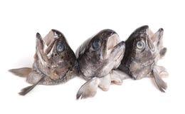 Teste del pesce della trota fotografia stock