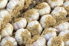 Teste dell'aglio Fotografia Stock Libera da Diritti