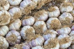 Teste dell'aglio Fotografie Stock Libere da Diritti