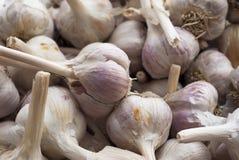 Teste dell'aglio Immagini Stock Libere da Diritti