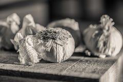 Teste dell'aglio su un tagliere di legno Fotografie Stock