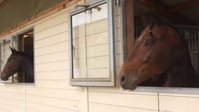 Teste di cavallo stock footage
