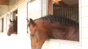 Teste di cavallo video d archivio