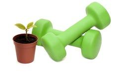 Teste di legno per forma fisica e la pianta. Fotografie Stock Libere da Diritti