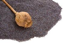 Teste e seme del papavero Immagini Stock Libere da Diritti