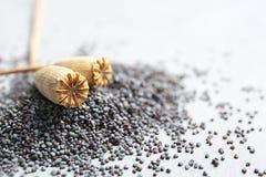 Teste e semi asciutti del papavero su fondo grigio immagine stock