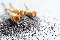 Teste e semi asciutti del papavero su fondo grigio fotografia stock libera da diritti