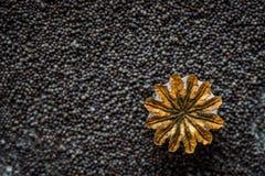 Teste e semi del papavero immagini stock libere da diritti