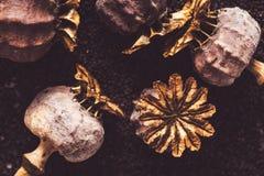 Teste e semi del papavero fotografie stock libere da diritti