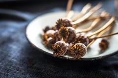 Teste e semi del papavero fotografia stock