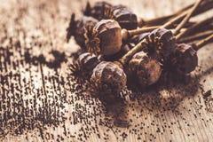 Teste e semi secchi del papavero fotografie stock