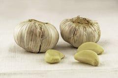 Teste e spicchi d'aglio fotografie stock libere da diritti