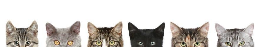 Teste mezze del gatto su una priorità bassa bianca Immagini Stock