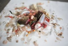 Teste morte del pesce Fotografia Stock Libera da Diritti