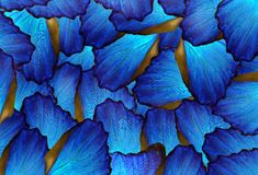 teste padrão abstrato das asas da borboleta do morpho fotos de stock royalty free