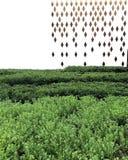 Teste padrão abstrato do fundo da natureza Imagem de Stock