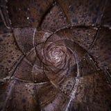 Teste padrão abstrato em folha de palmeira velho radial Fotografia de Stock Royalty Free