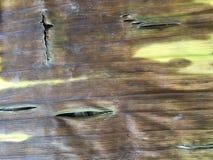 Teste padrão ascendente próximo de uma folha seca da banana imagem de stock