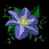 Teste padrão azul do ângulo da flor do bordado As clematites azuis populares tradicionais do vetor no fundo preto para a roupa pr Foto de Stock