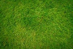 Teste padrão bonito da grama verde Imagens de Stock Royalty Free