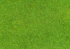 Teste padrão bonito da grama verde do campo de golfe Foto de Stock Royalty Free