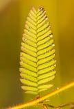 Teste padrão bonito das folhas 2 Fotos de Stock